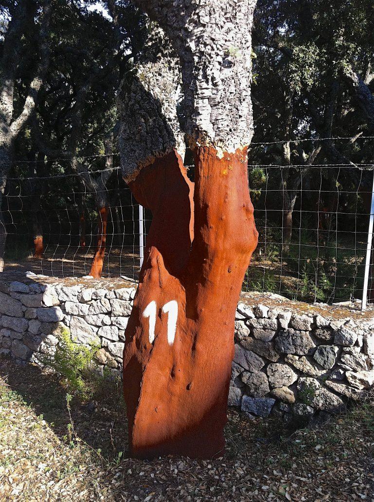 Sardinien Korkeiche