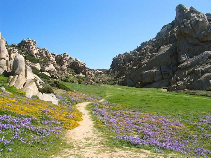 Wege in der Natur
